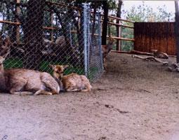 フェニックス動物園