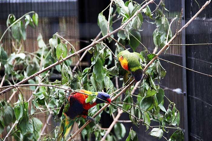 野鳥の森_鳥たち