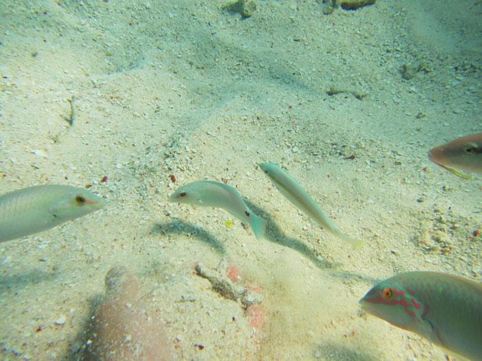 石垣島の海底