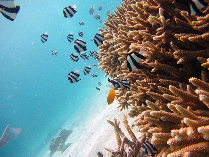 体験ダイビングでサンゴと魚
