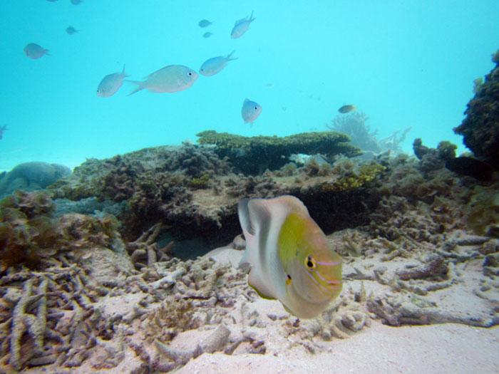 体験ダイビングで出会う魚