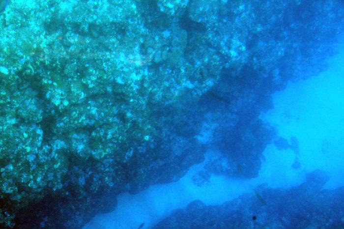 川平湾の海底