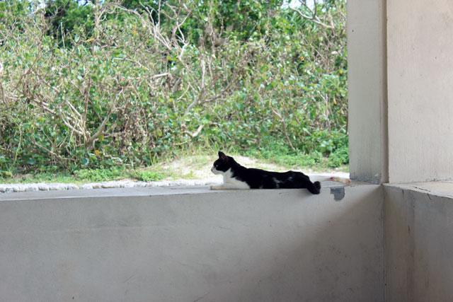 ゆっくり休む猫ちゃん