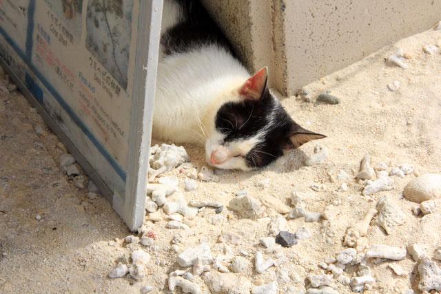 コンドイビーチの猫ちゃん